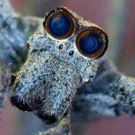 Arachnorocker